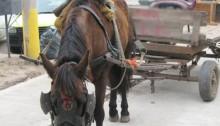carro-caballo
